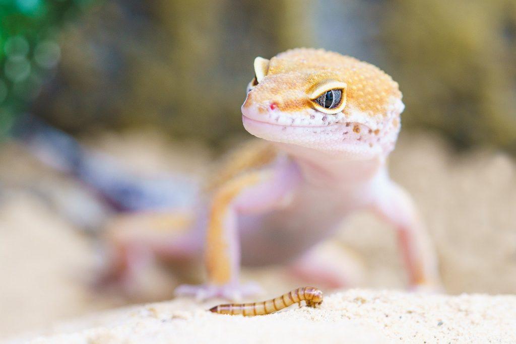 Reptielenbrein